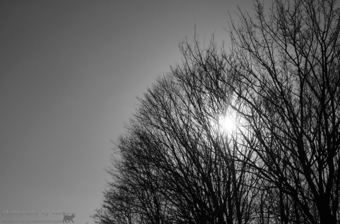 2019/04/05 monochrome